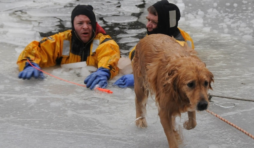Firefighter Swims in Icy Charles River to Save Dog