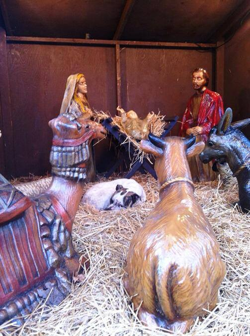 Injured Dog Finds Shelter in Town Nativity Scene