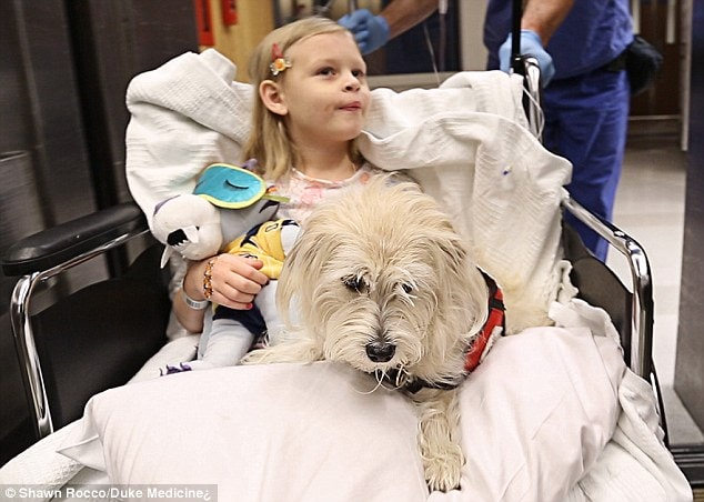 Service Dog Helps Monitor Young Girl During Surgery