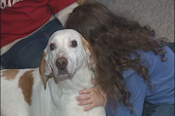 Injured and Lost Dog Saved by Stranger and Reunited with Family