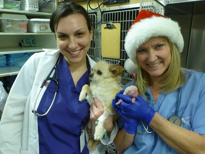 Miracle Puppy Born in Colorado