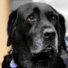 UPDATE: Donations Pour in to Allow Blind Man Keep his Guide Dog Orlando