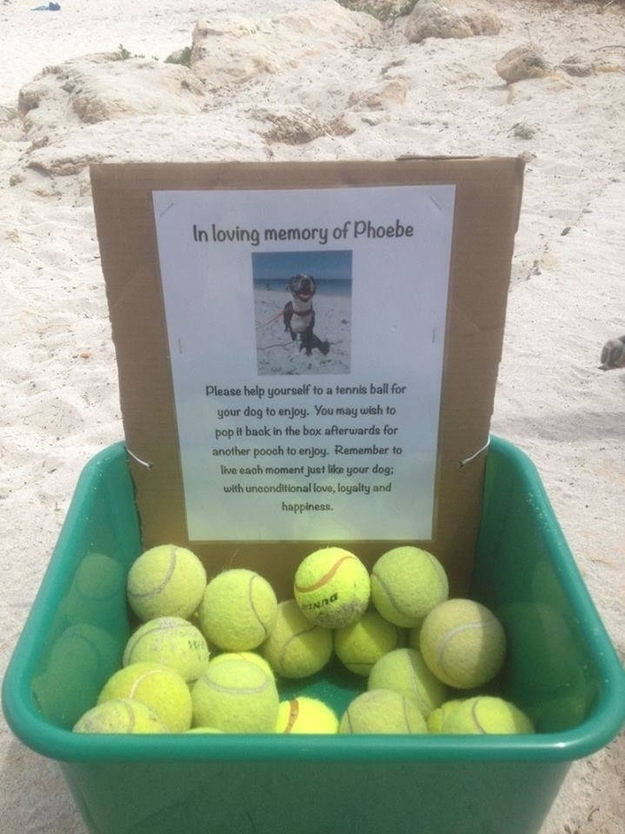 Family Honors Dog's Memory with Touching Memorial