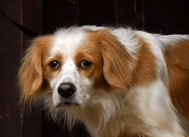 Volunteers Rescue Dog that Fell 60 feet onto Mountain Ledge
