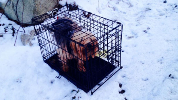 Dog Abandoned in Metal Cage Along Snowy Road in Upstate New York