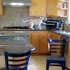 Clever Beagle Raids Toaster Oven