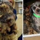 Dog Rescued & Adopted After Years of Neglect at Puppy Mill