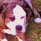 Detectives Risk Lives to Pull Dog from Burning Home
