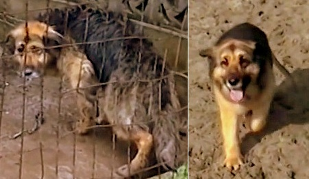 Dog Rescued After 10 Years Chained Outside in the Mud
