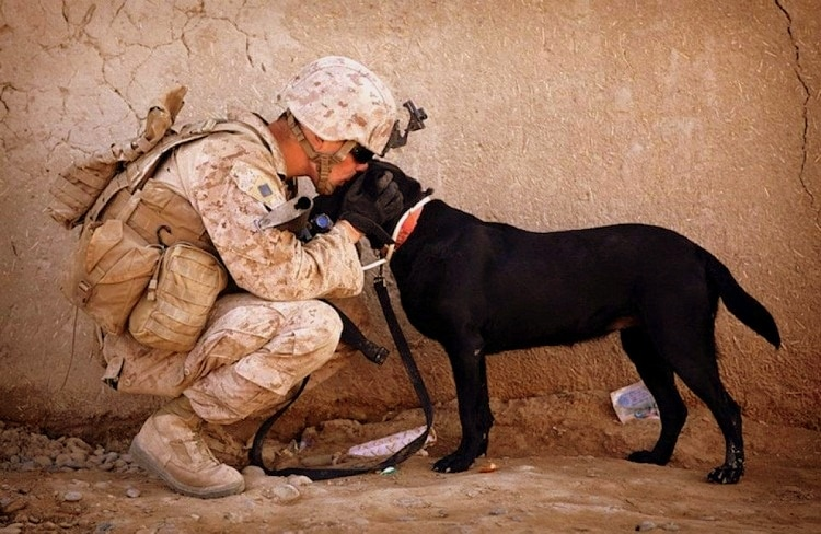 PTSD Ad Will Make You Want to Hug Your Dog