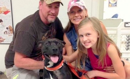 Update:  Dying Dog Carried Down Mountain Adopted