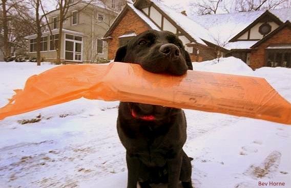 1.23.14 - Dog Brings Neighbors' Papers2