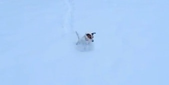 A Small Dog Plowing Through Snow