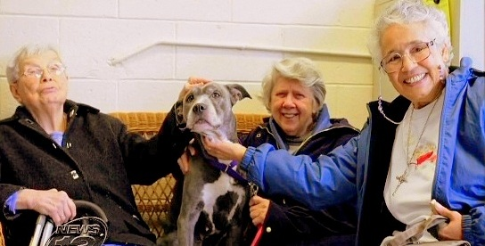 Senior Pit Bull Given Forever Home by Nuns