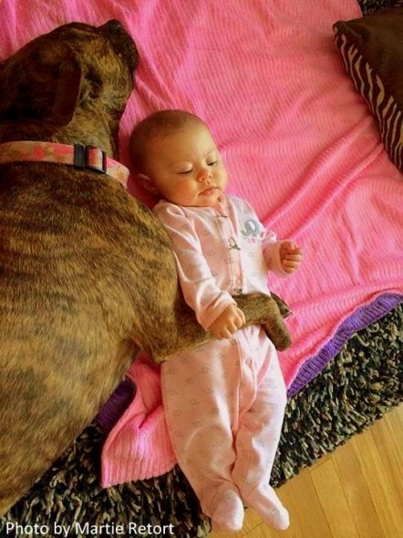 1.30.14 - Unadoptable Dog Becomes Nanny1