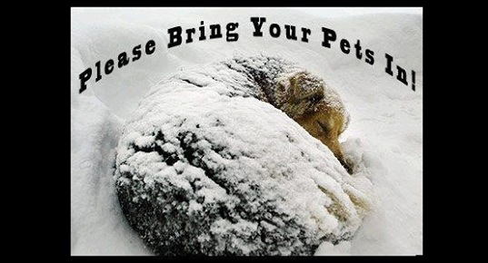 Help Pets Left Outside in the Cold