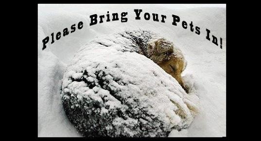 1.4.13 - Bring Pets Inside