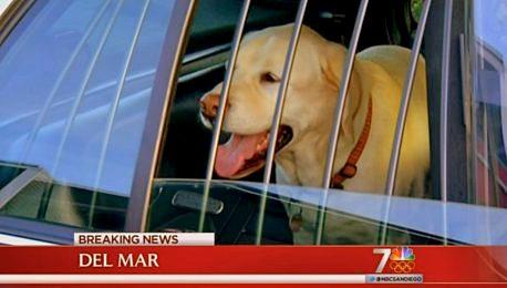 1.5.13 - Man Sacrifices Self to Save Dog2