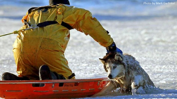 1.9.14 - Husky Rescued from Water