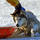 Boston Firefighter Risks Life to Save Husky from Icy Death