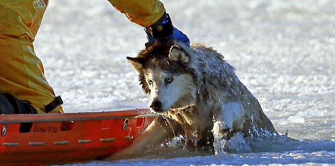 1.9.14 - Husky Rescued from Water2