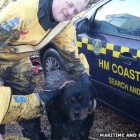 Dog Stuck in Mud Rescued Just Before High Tide