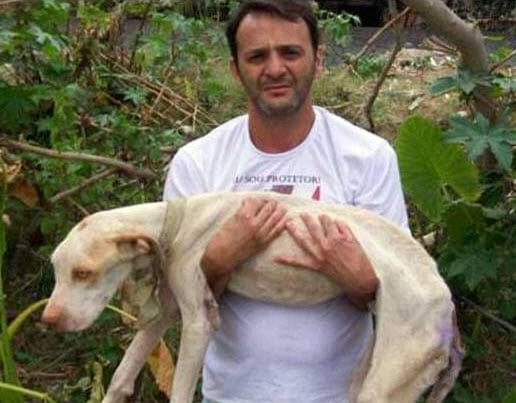 Brazilian Man Rescues Pit Bull on Brink of Death
