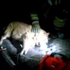 Phoenix Fire Department Rescues Dog from Fire