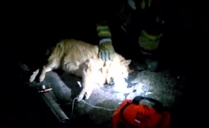 Phoenix firefighters reviving dog rescued from fire.