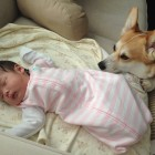 Corgi Becomes Newborn's Best Friend