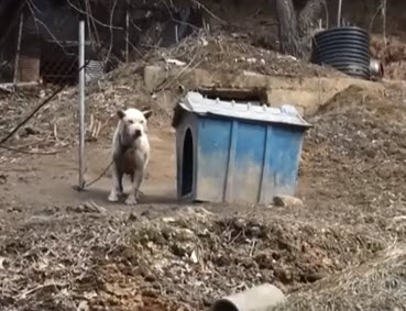 From Dog Farm to Rescue: A South Korean Dog's Tale