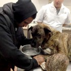 It's the End of the Road for Lucky, the Homeless Dog