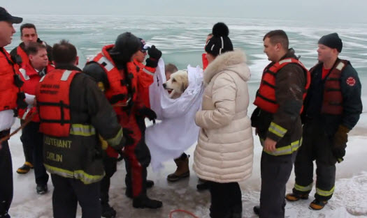 Chicago firefighters rescuing dog.