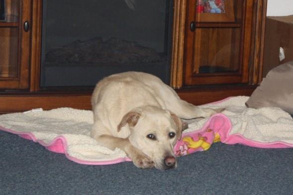Jayda before adoption