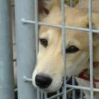 No Kill Mondays: Saving Animals One Day at a Time