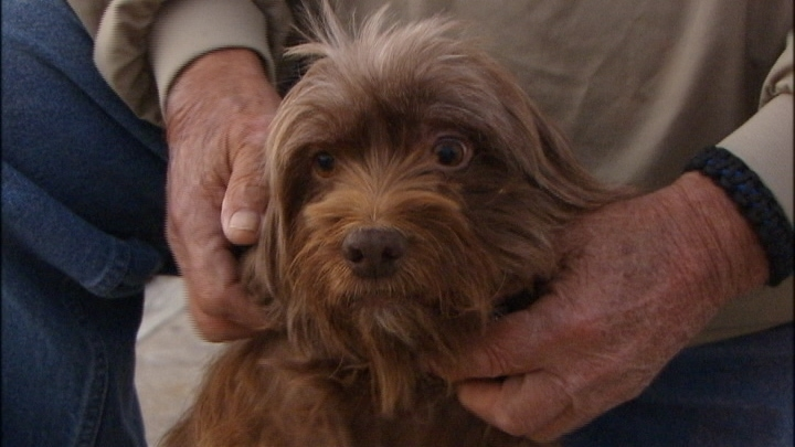Dog Treading Water Two Miles Off Shore Rescued