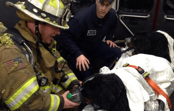 Firefighter Collects Donations to Care for Dogs He Helped Saved from Fire
