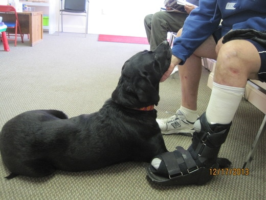 Three-Legged Dog Bringing Comfort to Amputee Patients