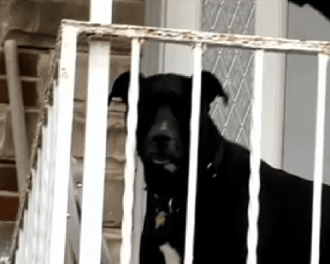Dog Saves Family from Armed Intruders