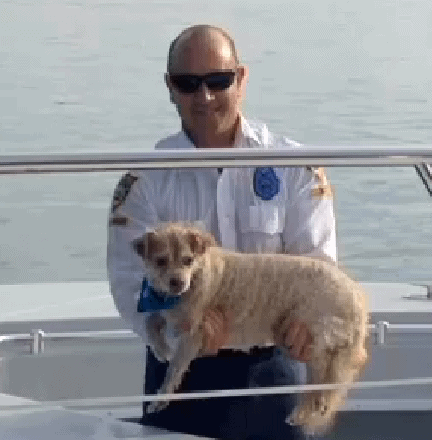 Miami Police Rescue Blind Dog from Bay