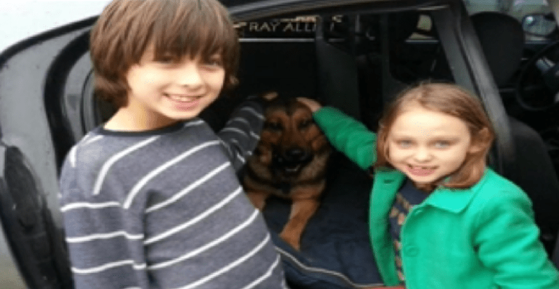 Boy Asks for Donations for Rescue Dogs for Birthday