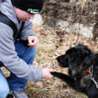 Man Saves Dog Stuck on Guardrail and Reunites him with Family
