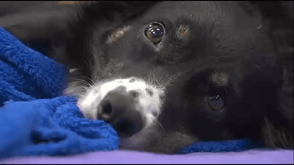 UPDATE: Dog Hit by Plow Reunited with Owner after Surgery