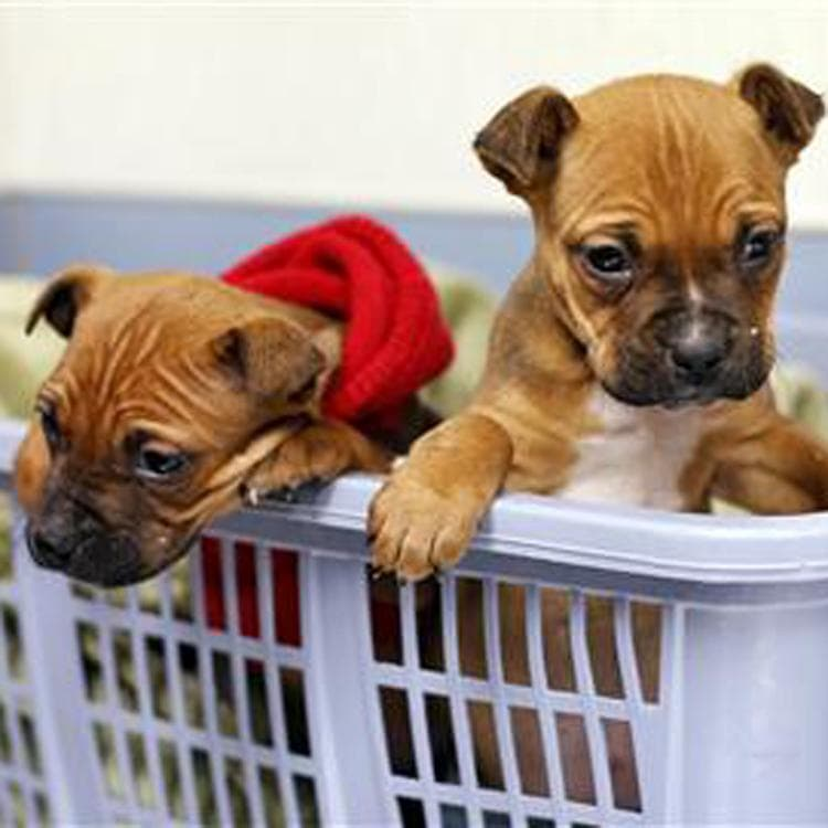 Three Puppies Abandoned in Freezing Temperatures Recovering
