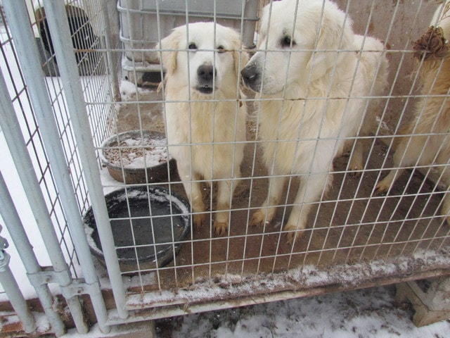 18 Dog Rescued from Kentucky Puppy Mill