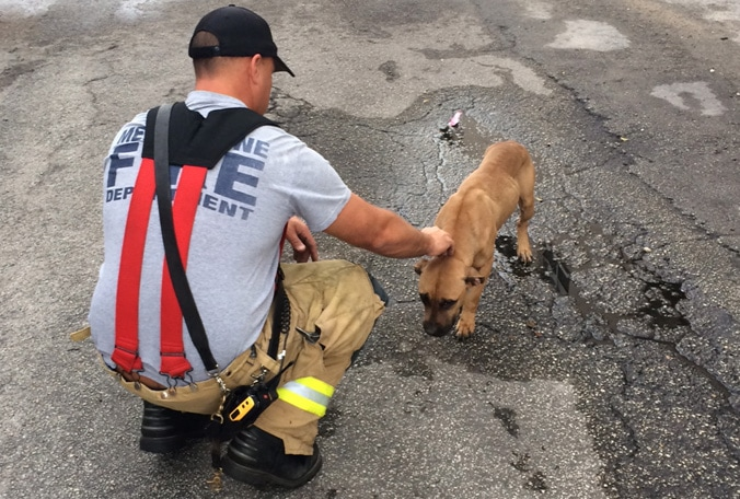 Stray Dog in Bad Shape Seeks Help from Firefighters