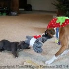 Duncan Lou Who and Meaty, Christmas Socks Tug Of War