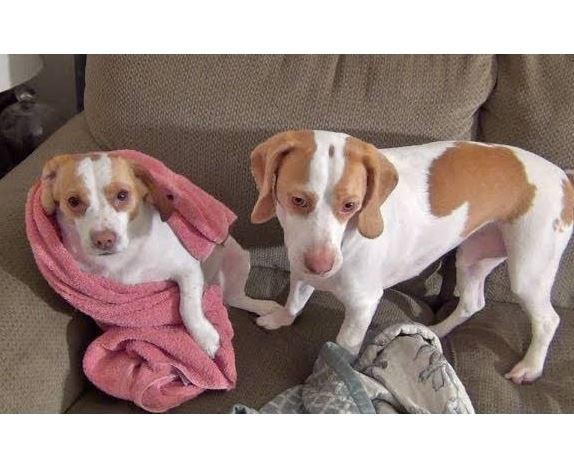Tomfoolery Tuesday: Cute Dogs Amused by Towel
