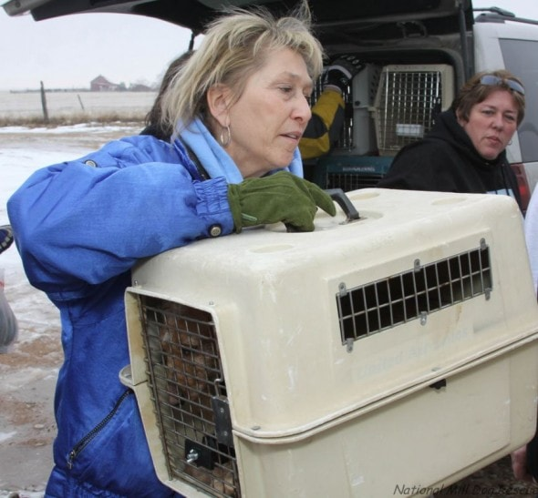12283379-national-mill-dog-rescue-volunteer-unloads-puppy-mill-dog-from-rescue-van