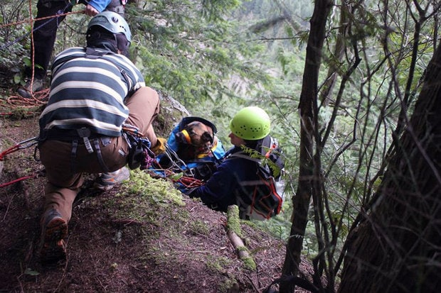 Dog Rescued after Falling 150 ft. in Chuckanut Mountains